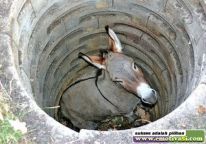 keledai-di-dalam-sumur